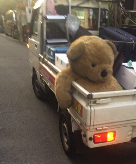 bear-in-truck